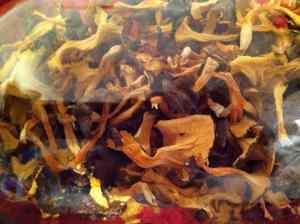 Goldstielige getrocknet, abgefüllt im Glas